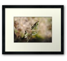 The World In Macro Framed Print