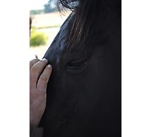 Horses-Second To Mans Best Friend Photographic Print