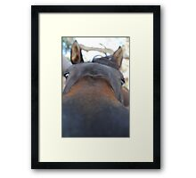 Loving Horse -A Curious mind Framed Print