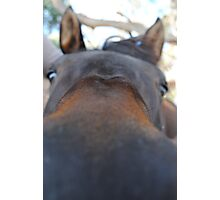 Loving Horse -A Curious mind Photographic Print