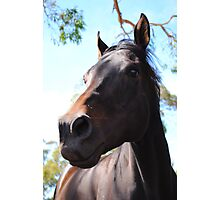 Beauty Of Horses  Photographic Print