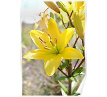 Mother Nature Beauty-Flower Poster