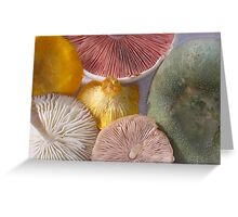 5 Colors Of Edible Wilds Greeting Card
