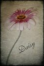 Daisy by Elaine Teague