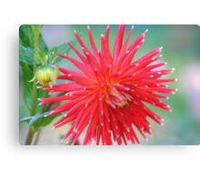The Perfect Capture Of A Flower  Canvas Print
