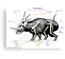 Styracosaurus Skeleton Study Canvas Print