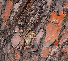 Bark Abstract by Elisabeth Thorn