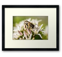 Pre Spring Bumble Bee Framed Print