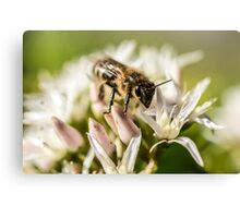 Pre Spring Bumble Bee Canvas Print