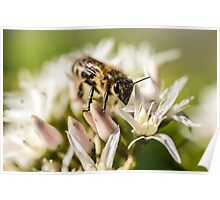 Pre Spring Bumble Bee Poster