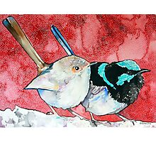 Pair of Wrens Photographic Print