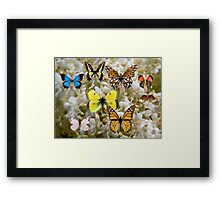 Patch of Butterflies Framed Print
