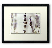 Bee & Stem Framed Print