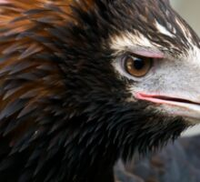Wedge-Tailed Eagle,  Sticker