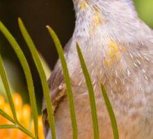Little Friarbird Sticker