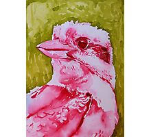 Kookaburra with Green Photographic Print