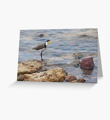 Plover Greeting Card