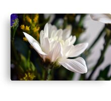 White flower macro. Canvas Print