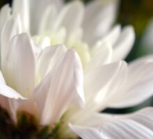 White flower macro. Sticker