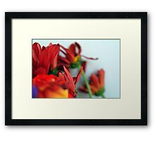Natural composition with red petals. Framed Print