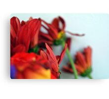 Natural composition with red petals. Canvas Print