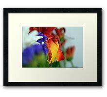 Close up on flower petals. Framed Print