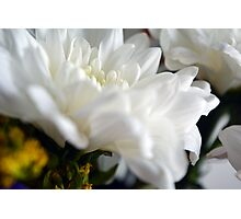 White flower macro. Photographic Print
