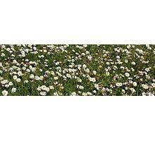 Daisy banner Photographic Print