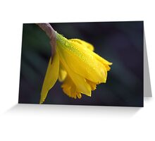 Daffodil Rain Greeting Card