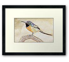 colorful bird  Framed Print
