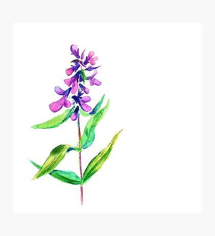 Lilac flower. Watercolor floral illustration. Photographic Print
