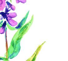 Lilac flower. Watercolor floral illustration. Sticker
