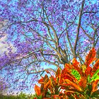 The Colours of Spring .. HDR by Michael Matthews