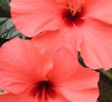 Flower in bloom Sticker