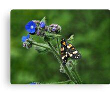 Scarlet Tiger Moth - Callimorpha Dominula Canvas Print