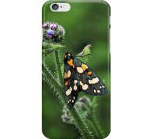 Scarlet Tiger Moth - Callimorpha Dominula iPhone Case/Skin