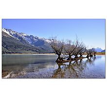 Willow Trees of Glenorchy, NZ Photographic Print