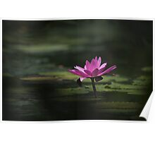 Water Lillie Poster