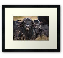 The Wilderbeast Framed Print