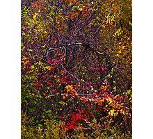 autumn leaves design 2 Photographic Print