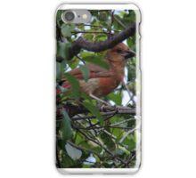 Cardinal II iPhone Case/Skin