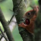 squirrel joy by Birgit Van den Broeck