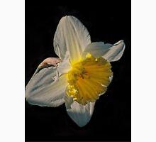 Sunlight Daffodil Unisex T-Shirt