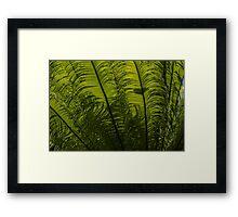 Tropical Green Rhythms - Feathery Fern Fronds - Horizontal View Upwards Left Framed Print