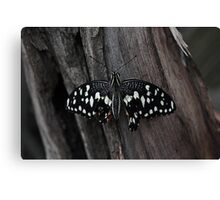 another butterfly  Canvas Print