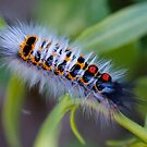 Colorful as a Caterpillar by HaleyRenee