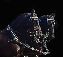 Gorgeous Team Of Friesians by Bine