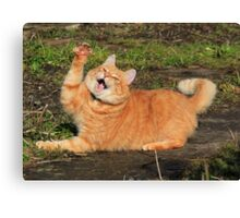 Ginger cat playing Canvas Print