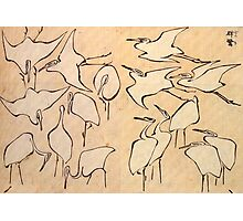 Hokusai, Japan, Japanese, Art, Cranes, Cranes from Quick Lessons in Simplified Drawing Photographic Print