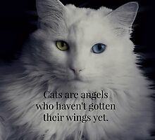 Cats are angels who haven't gotten their wings yet by Scott Mitchell